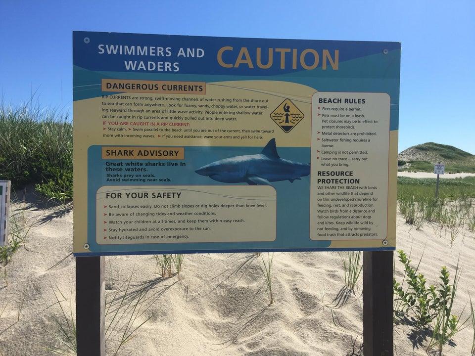 Great white shark, fear